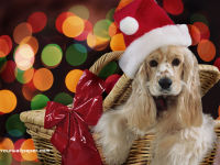 Christmas Puppy Santa Wallpaper